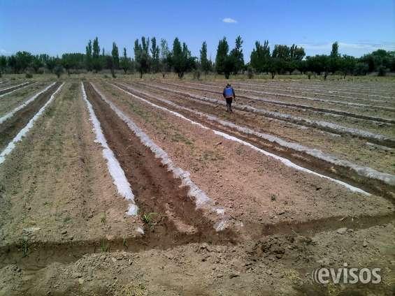 Fotos de Vendo finca en mendoza (8 hectareas) 7