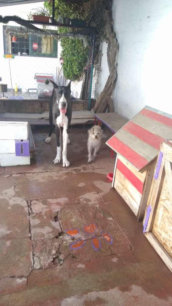 Guarderia canina pata